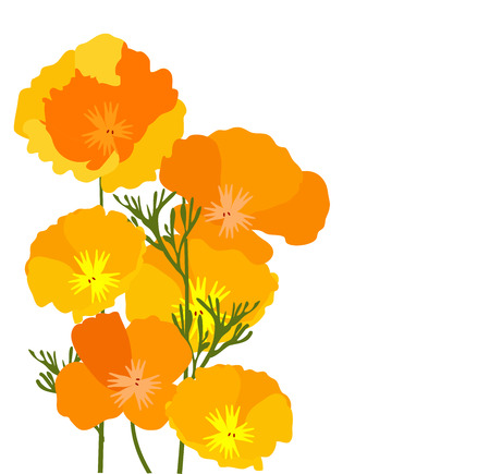 vector illustration of California state yellow and orange poppies. Illustration