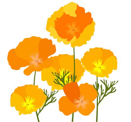 illustration vectorielle de coquelicots jaunes et orange de l'état de Californie.