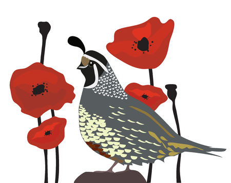 vector illustration of a quail and red poppies seamless background.