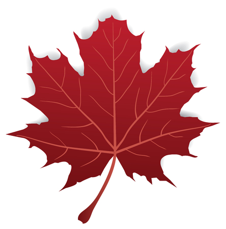 Maple leaf isolated on white Vectores