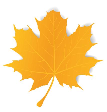 Maple leaf isolated on white Ilustração