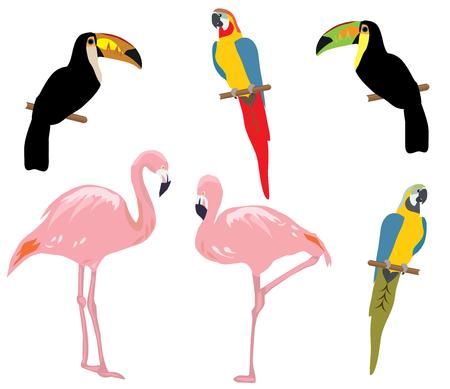 ilustración vectorial de un conjunto de aves tropicales. flamenco, tucán, loro Ilustración de vector