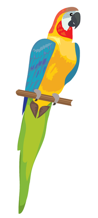 vector illustration of a parrot isolated on white background.
