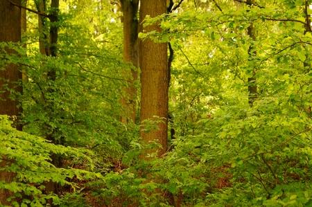 Beautiful wet forest landscape after rainshower Meditative background  photo