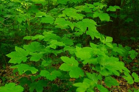 Meditativ green forest leaves Forest soundscape rainforest photo