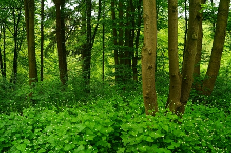 Inspiring forest beautiful landscape with flowers and leaves Meditation,relax,yoga,tai chi photo