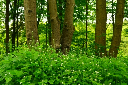 Magical forest flowers with some tree stem in the background photo