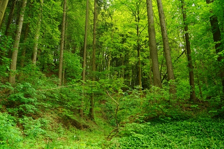 natue: Spring forest landscape  Stock Photo