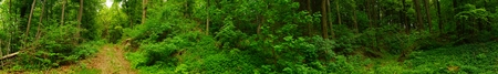 japanes: Footpath in forest Beautiful woodland view Spring Forest panorama Relaxation concept