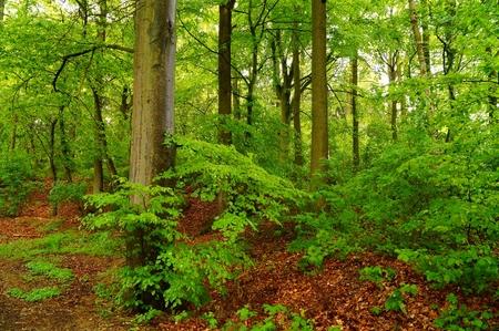 Forest after rainshower photo
