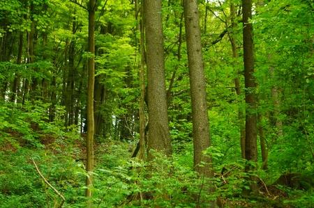 Forest landscape Nature SPA concept photo