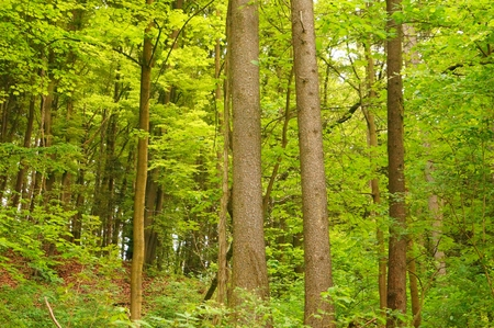 Beautiful spring forest photo