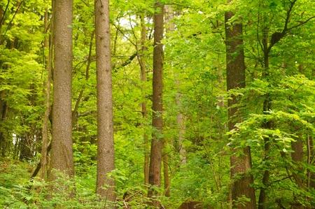 Beautiful forest light photo