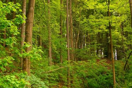 Inspiring forest photo