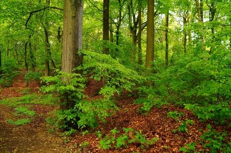 Forest after a rainstorm Nature SPA concept photo