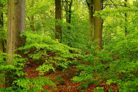 Amazing forest landscape photo