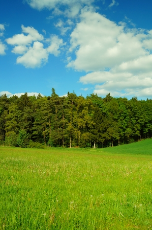 Spring woodland Nature landscape flower field Blue sky with clouds   photo