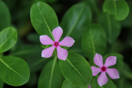 lumpini: Little flower in the Lumpini park, Bangkok, Thailand