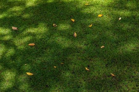 Sward background texture photo
