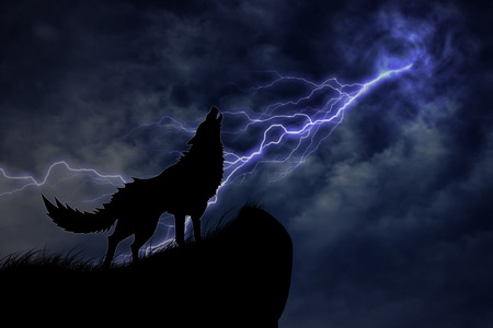 thunderstorm: wolf in silhouette to thunderstorm