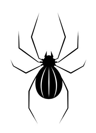 black widow: Black spider isolate