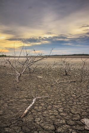 arboles secos: Barren atardecer suelo