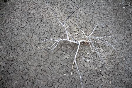 barren: Dry trees on barren ground Stock Photo