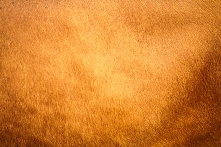factitious: Orange fur texture background Stock Photo