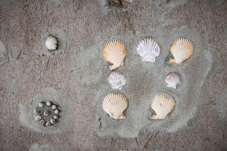 shell pattern: Wall mortar shell pattern