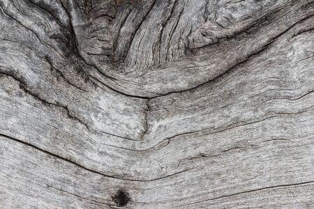 rupture: texture of tree stump. The surface of the tree stump rupture. Stock Photo