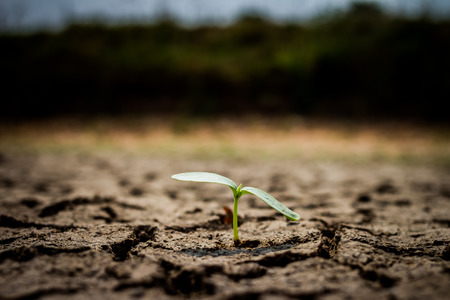 torrid: Green plant growing out of cracks in the earth Stock Photo