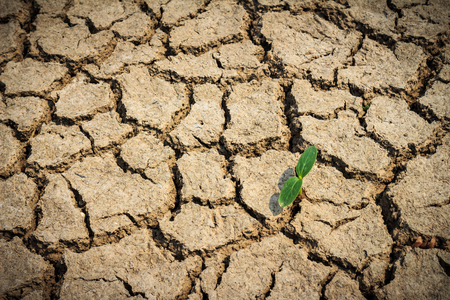 torrid: Cracked dried ground with only one green plant left. Stock Photo