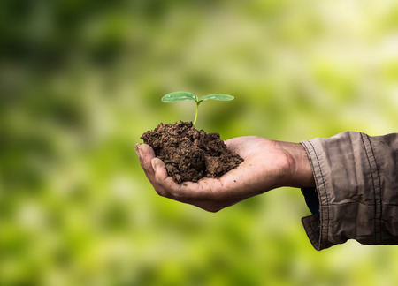 forestation: sapling in hand as of agriculture Stock Photo