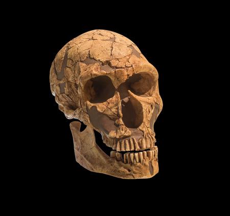 cranium: Old archaeological find human skull cranium isolated on black background Stock Photo