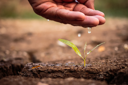 barrenness: Hand watering the ground barren Stock Photo