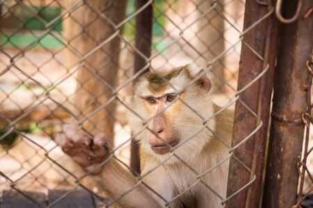 caged: A caged Macaque in Thailand Stock Photo