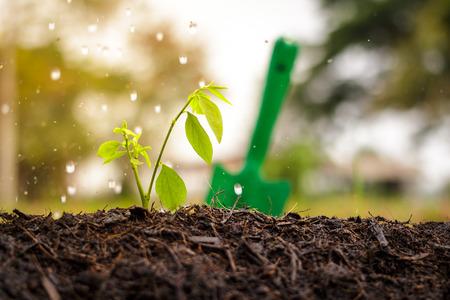 barren: watering the ground barren