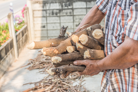 carrying: Man carrying firewood