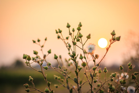 drippy: blurry sunset with grass Stock Photo