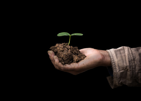 replant: Hands holding sapling in soil on black background Stock Photo