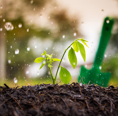 forestation: Growth, Plant, Rain.