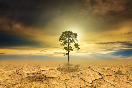 Tree dry soil texture background Stock Photo