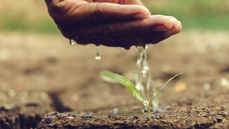 Hand watering the ground barren Stock Photo