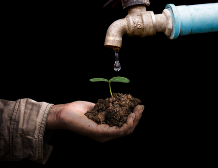 Ecology concept senior man holding young spring plant in hands. old rusty tap leaking water isolate on black background
