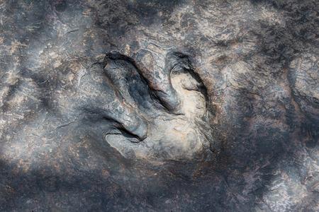 Real dinosaur footprint , Thailand. Stock Photo - 96832810