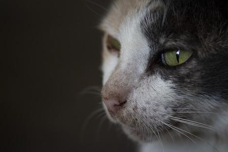 Focus cat eyes macro Stock Photo