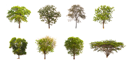 Isolated trees on white background , The collection of trees. Banco de Imagens