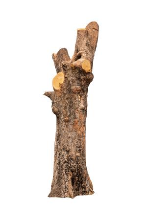 corteccia di albero isolata con sfondo bianco e con tracciato di ritaglio