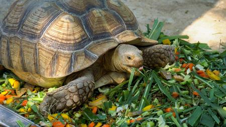 Turtles are eating food