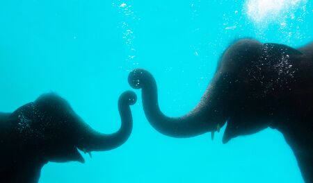 Elephant show swimming and blow the bubbles out of the trunk underwater in Thailand.